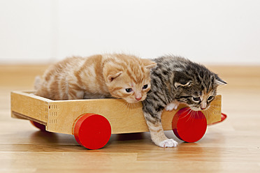 Germany, Kittens sitting on wooden toy, close up - FOF003655