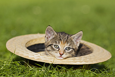 Germany, Kitten sitting in hat, close up - FOF003681