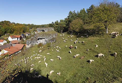 Germany, Bavaria, Franconia, Upper Franconia, Franconian Switzerland, Kroegelstein, Hollfeld, View of sheep grazing on landscape - SIEF002025