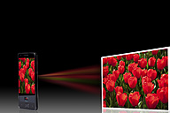 Tulip bed on projection screen through mobile phone, close up - CSF015588