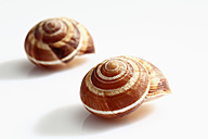 Shell on white background, close up - CSF015618