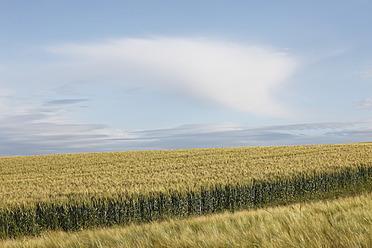 Austria, Lower Austria, Weinviertel, View of grainfield - SIEF002209