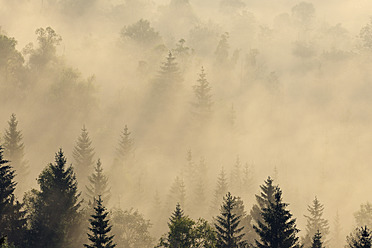 Germany, Bavaria, Upper Bavaria, Munich, View of misty forest at dawn - RUEF000806