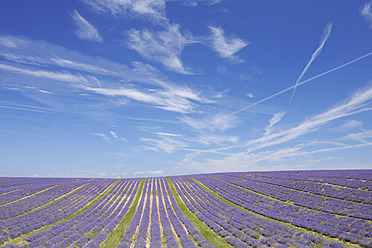France, View of lavender field - RUEF000823
