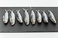 Sardines on chopping board - MAEF004357