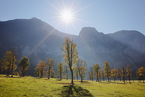 Austria, Tyrol, View of Karwendel Mountains with  sycamore maples - SIEF002321