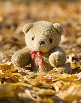 Austria, Teddy bear in autumn leaves - WWF002144