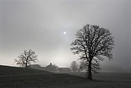 Austria, Salzburg, Farmhouse in autumn - WWF002215