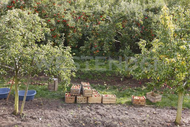 Germany, Bavaria, Oberschwarzach,  View of apple tree - SIEF002394