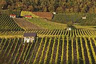 Germany, Bavaria, Donnersberg Borough,  View of vineyards at the Falkenberg - SIEF002390