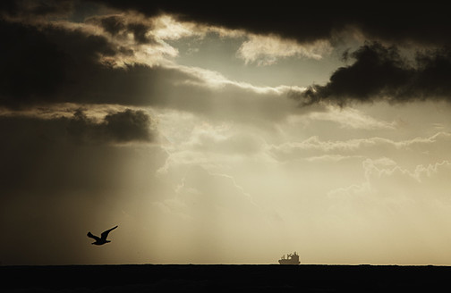 Israel, Seagull flying at sunset - THF001180