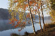 Germany, Bavaria,Ellertshauser See,  View of foggy lake with trees - SIEF002355