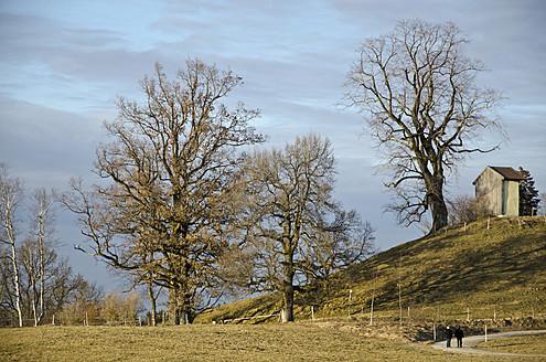 Germany, Bavaria, Chestnut tree on hill near Reutberg Abbeyl - LFF000335