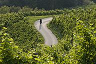 Slovenia, Spicnik, Mature man cycling through vineyard - DSF000429