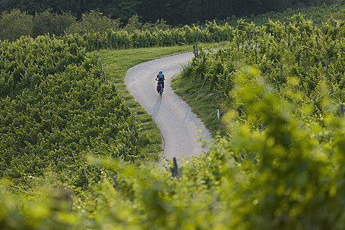 Slovenia, Spicnik, Mature man cycling through vineyard - DSF000432