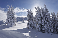 Austria, Styria, View of snow covered firs on Gasslhohe mountain - SIEF002503