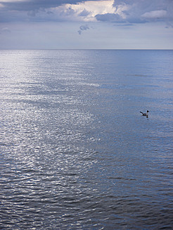 Germany, Seagull swimming with cloudy sky over Baltic Sea - LFF000363