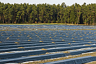 Germany, View of aspargus cultivation in late march - LFF000393