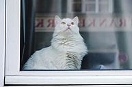 Germany, Bavaria, Munich, Cat sitting behind window - LF000482