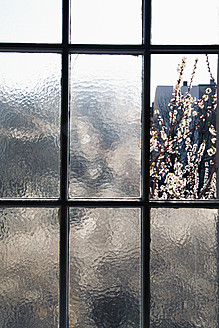 Germany, Blooming branches through old window - JMF000127
