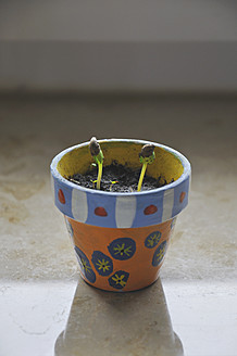 Painted flowerpot with sprouts, close up - AXF000059