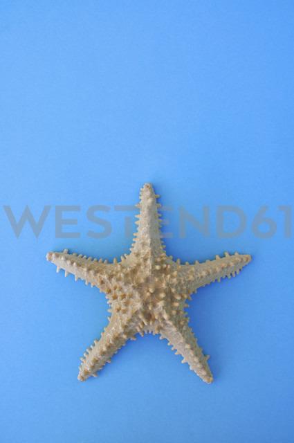 Starfish on blue background - AXF000080 - Axel Ganguin/Westend61