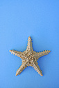 Starfish on blue background - AXF000080