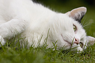 Germany, White cat lying on grass, close up - FLF000083