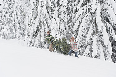 Austria, Salzburg, Young men carrying christmas tree in winter - HHF004213