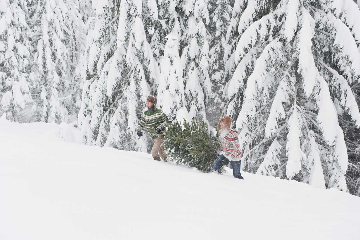 Austria, Salzburg, Young men carrying christmas tree in winter - HHF004213 - Hans Huber/Westend61