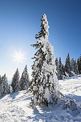 Germany, Bavaria, View of snow covered trees at Bavarian Forest - FOF003897