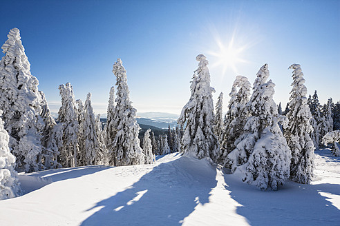 Germany, Bavaria, View of snow covered trees at Bavarian Forest - FOF003899