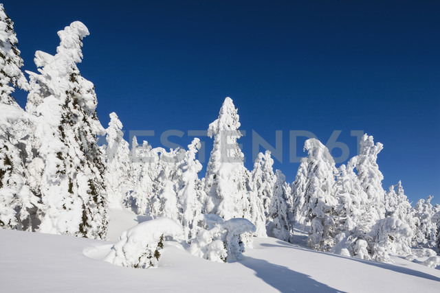 Germany, Bavaria, View of snow covered trees at Bavarian Forest - FOF003902
