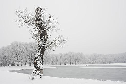 Germany, North Rhine Westphalia, Cologne, View of chestnut tree near Decksteiner Lake at city park - GW001856