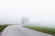 Germany, Bavaria, View of country road through fog - FLF000092