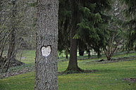Germany, Baden-Wuerttemberg, Heart shaped carved on tree - AXF000189