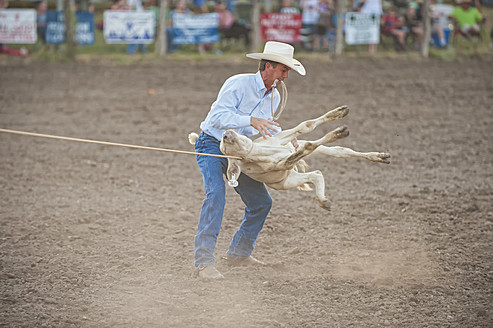 USA, Texas, Man holding rope of calf at rodeo - ABA000170