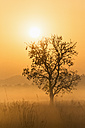 India, Uttarakhand, View of Mystic morning at Jim Corbett National Park - FOF004067