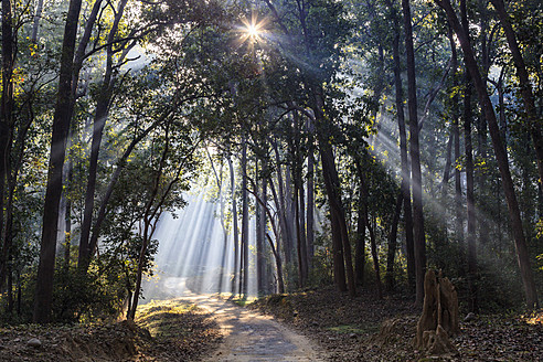 India, Uttarakhand, View of forest with shala trees at Jim Corbett National Park - FOF004077