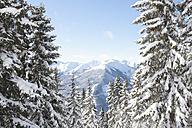 Austria, Saalbach-Hinterglemm, Alps  in background - FLF000129