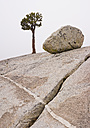 USA, California, View of rocky landscape, tree and boulder - WBF001233