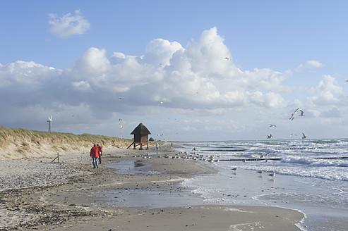 Germany, Mecklenburg Western Pomerania, Seagulls at Baltic Sea - MJ000104