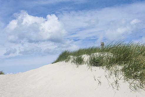 Germany,  Mecklenburg Western Pomerania, Ammophila arenaria on sand dunes - MJF000121