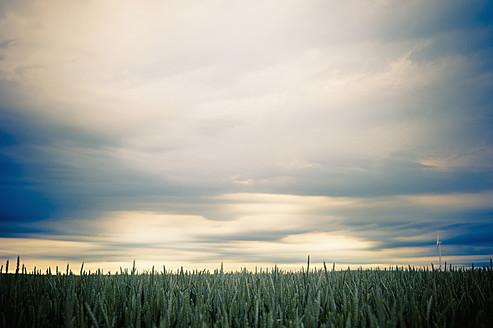 Germany, Saxony, View of crop field, wind turbine in background - MJF000137