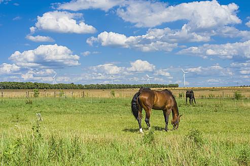 Germany, Saxony, Horses in wind park, wind turbine in background - MJF000138