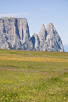 Italy, Alpine meadow towards Schlern and Santner Spitze mountains at South Tyrol - UMF000419