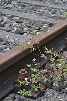 Germany, Bavaria, View of rail track with weed - AXF000250