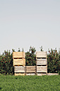 Spain, Catalonia, Apple plantation with wooden boxes - JMF000211