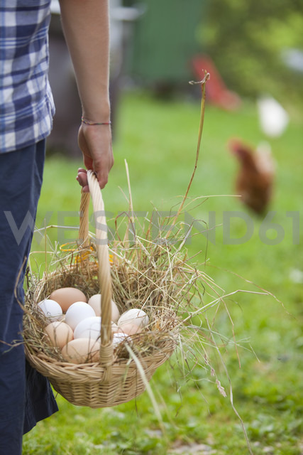 Germany, Bavaria, Boy with basket of eggs and chicken on farm - HSIYF000107