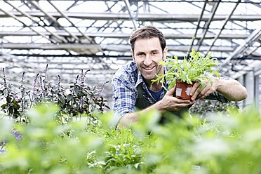 Germany, Bavaria, Munich, Mature man in greenhouse with rocket plant - RREF000081